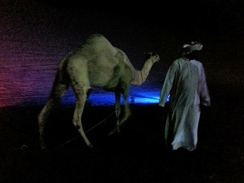 Camel at night, Liwa desert. Photo: Anne Senstad